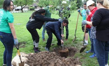 volunteers plant trees at Sunriver Park